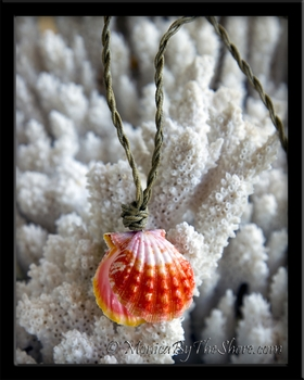 "Custom for "" Nikki"" Whole Hawaiian Sunrise Shell Locket Necklace"