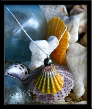 Extra Large Rainbow Hawaiian Sunrise Shell with Tahitian Black Pearl Silver Necklace