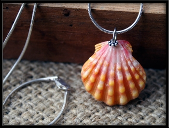 Orange Sunrise Shell Pendant on Silver Chain