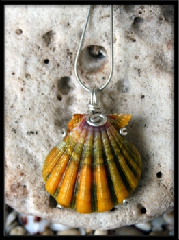 Rainbow Pattern Sunrise Shell Hawaii Necklace
