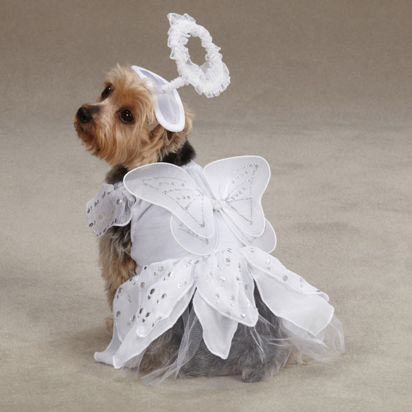 Angel Paws Dog Costume ... & Angel Paws Dog Costume - Kooldawgtees