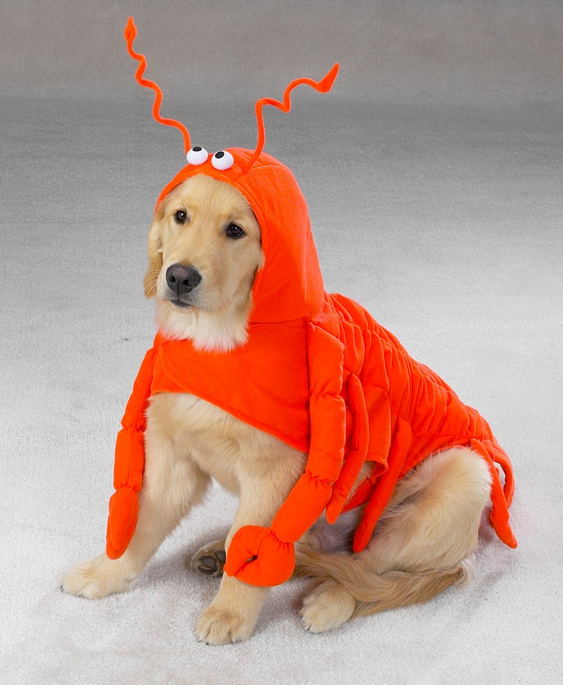Lobster Paw Dog Costume ... : fish costume for dogs  - Germanpascual.Com