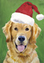 Golden Retriever  - Van Vliet Christmas Large Flag