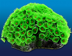 Button Polyp Green 6.75x5.75x3.5