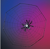 "Rubies - Suction cup Spider on 16"" web"