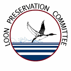 The Loon Preservation Committee, Moutonborough, NH