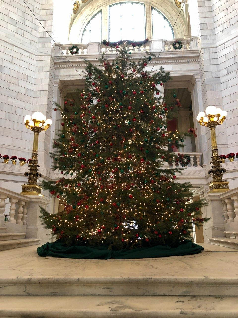BEDROCK TREE FARM DONATES THE RI STATE HOUSE ROTUNDA CHRISTMAS TREE