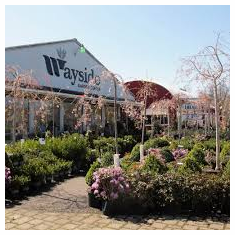 Wayside Garden Center, Macedon, NY