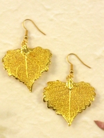 Nature Cottonwood Leaf In Gold Electroplated Earrings