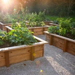4X8 Raised Bed Garden (Wood)