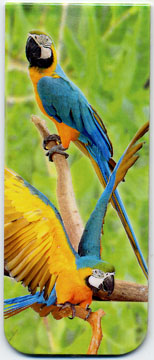 Bookmark Magnetic Blue & Gold Macaws