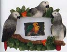 "Picture Frame 4x6"" African Grey"
