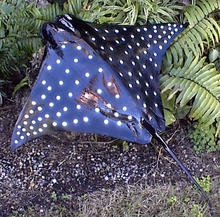 "20"" Spotted Eagle Ray Half Mount Fish Replica"