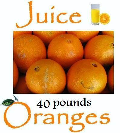 Juice Oranges 40 lb. box