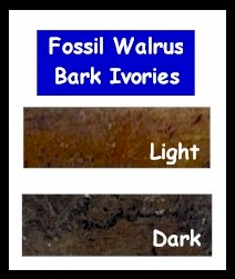 Fossil Ivory Colors