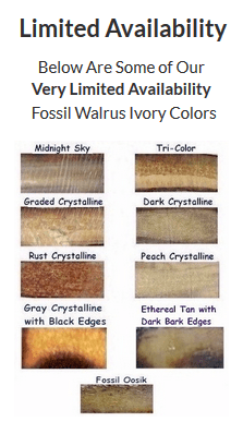 Limited Availability Fossile Walrus Ivory Colors