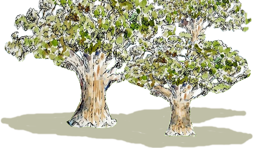 live oak trees in logo