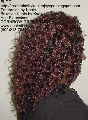 Curly Tree Braids, Right229.