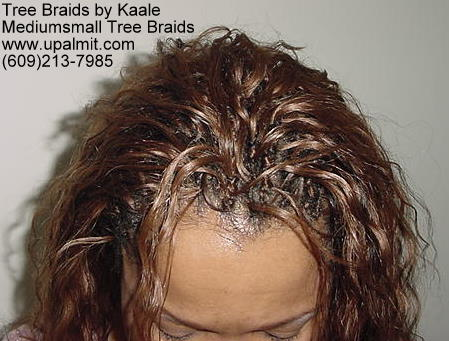 Tree Braids- Top 2.