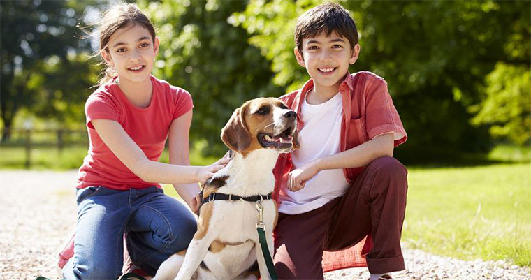 10 Tips To Better Fundraise For Animal Shelters