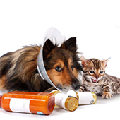 link toMost Common Pet Health Problems