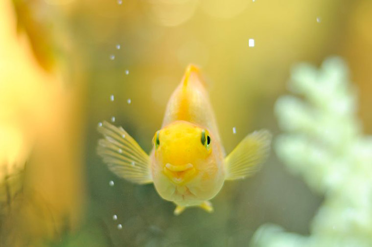 Caring For Pet Fish