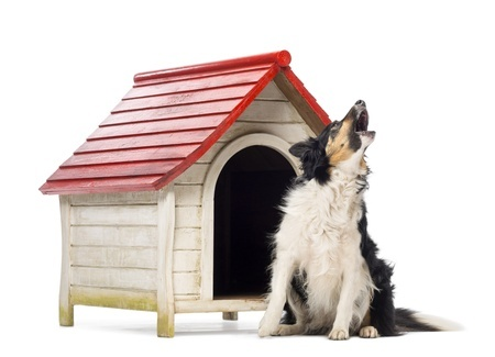 ways to stop your dog from barking