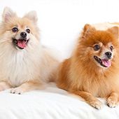 link to 20 Tips For Living With Multiple Pets