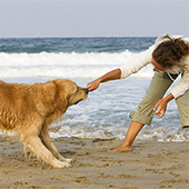 5 Fun Summer Activities to Enjoy With Your Dog