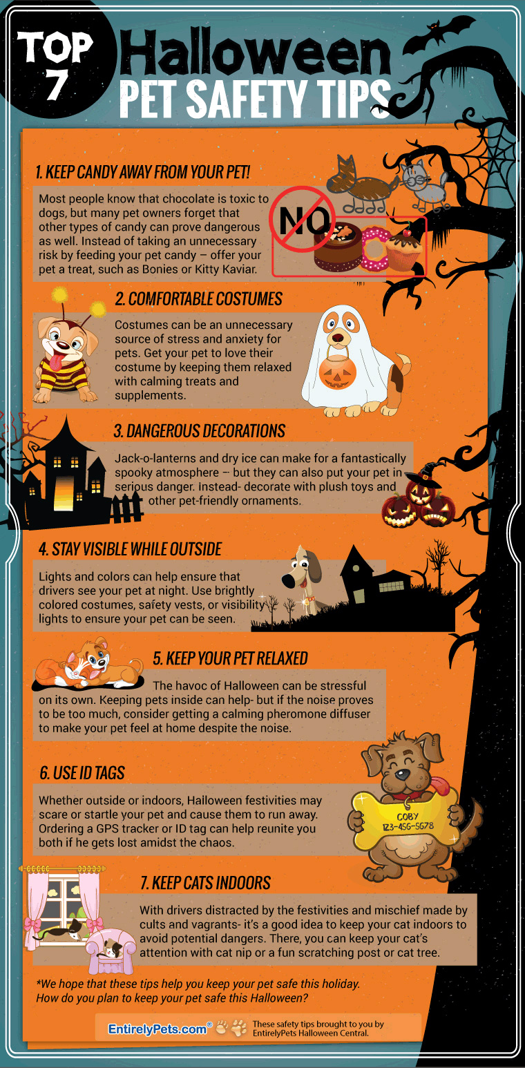 safety tips for halloween Halloween safety tips will help ensure a safe and fun experience for children with special needs halloween can be a fun time, but it also has an element of.