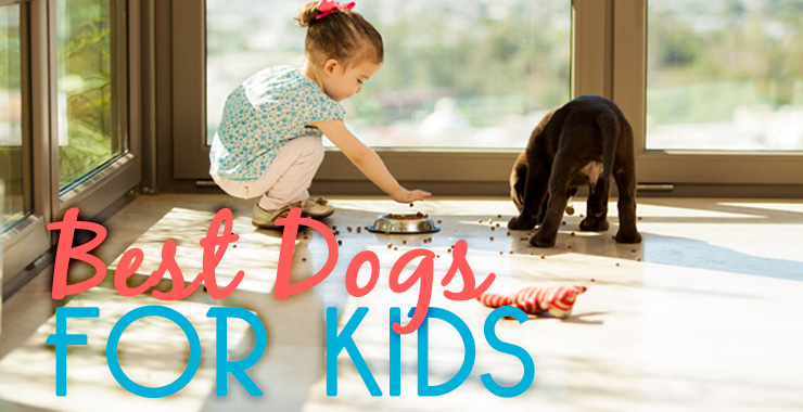 Top 5 Best Breeds for Kids