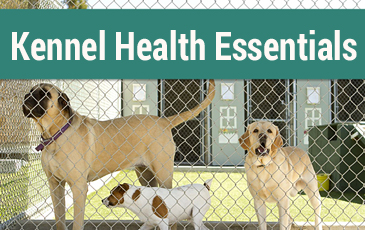Kennel Health Essentials Article