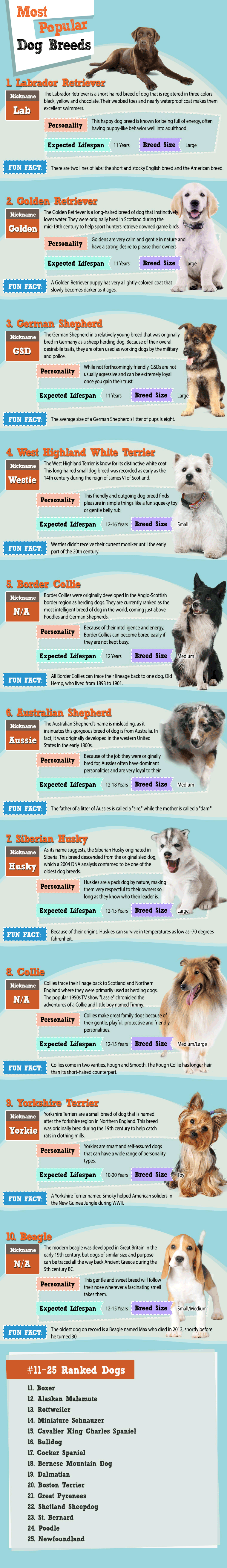 The top 10 most popular dog breeds of 2015 based on more than 17,500 votes