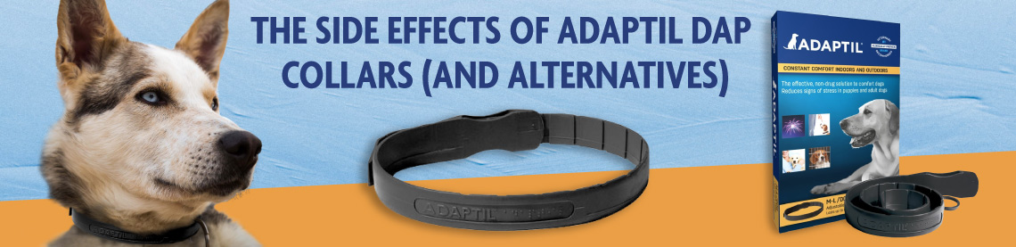 The Side Effects of Adaptil DAP Collars (and Alternatives)