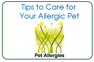 Tips to Care for Your Allergic Pet