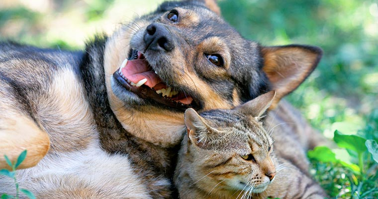 dog and cat palying on grass