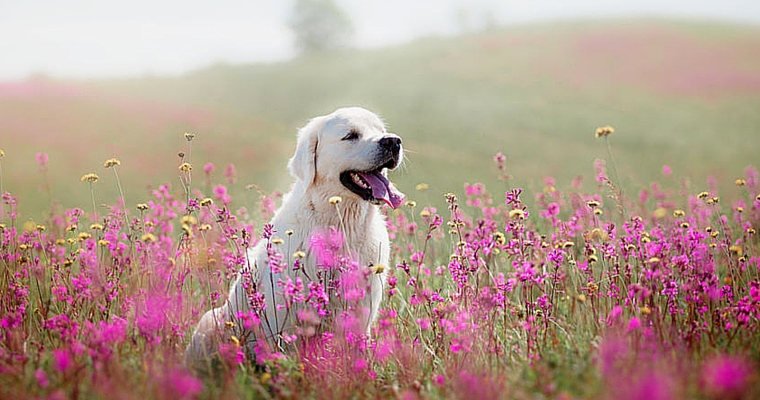 dog in pink flowers