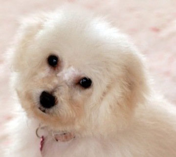 Is Angel Eyes Natural Safe For Dogs