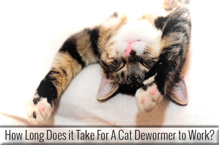 how long does it take for a cat dewormer to work entirelypets. Black Bedroom Furniture Sets. Home Design Ideas