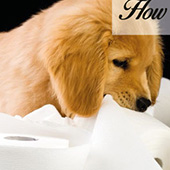 link to  How To Potty Train Your Puppy