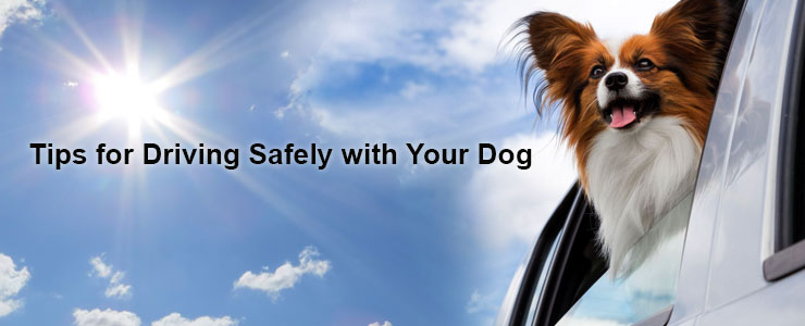 Cars and Canines: Driving Safely with Your Dog
