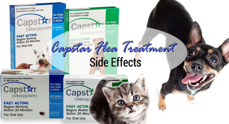 Capstar side effects adverse reactions to cipro
