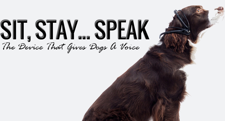 Sit, Stay...Speak: The Device that Gives Dogs A Voice