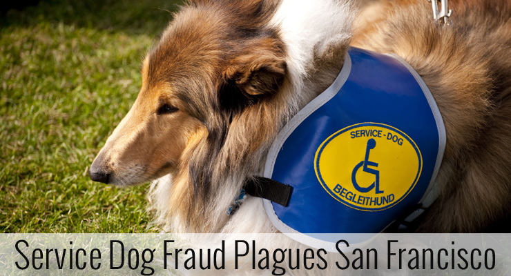 San Francisco Service Dog Fraud