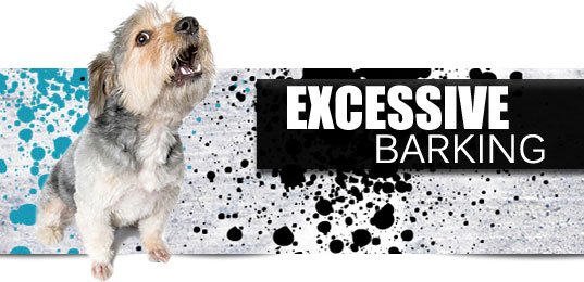 How to Control Excess Barking