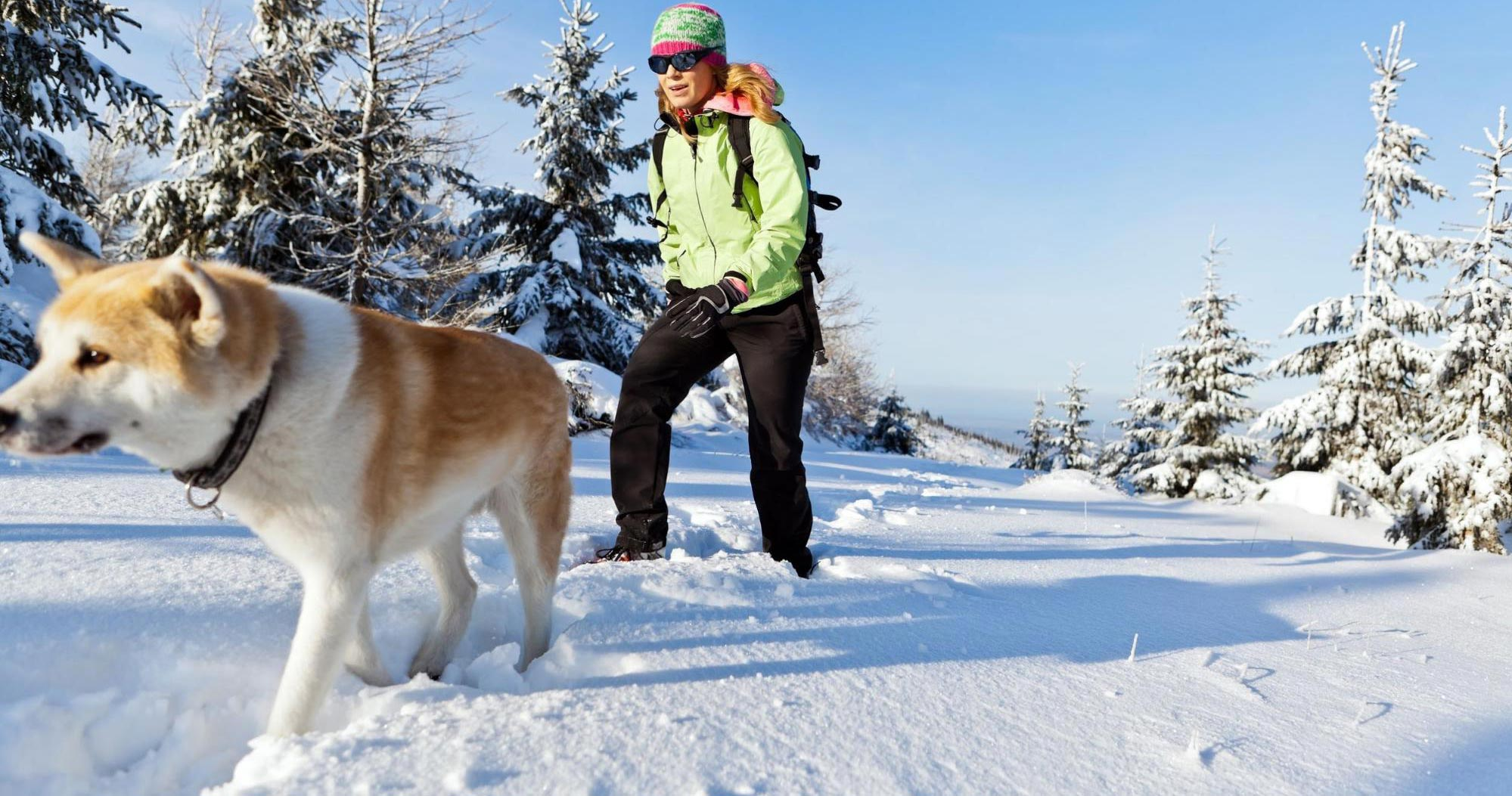 photo Exercising with Your Dog in Winter