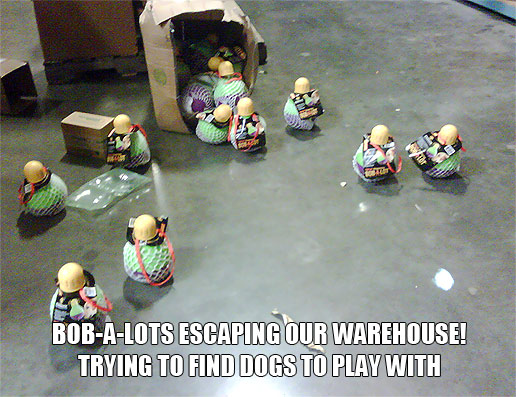 Bob-A-Lots escaping our warehouse trying to find dogs to play with