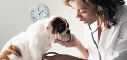 Frontline Plus for Dogs Lifestyle shot