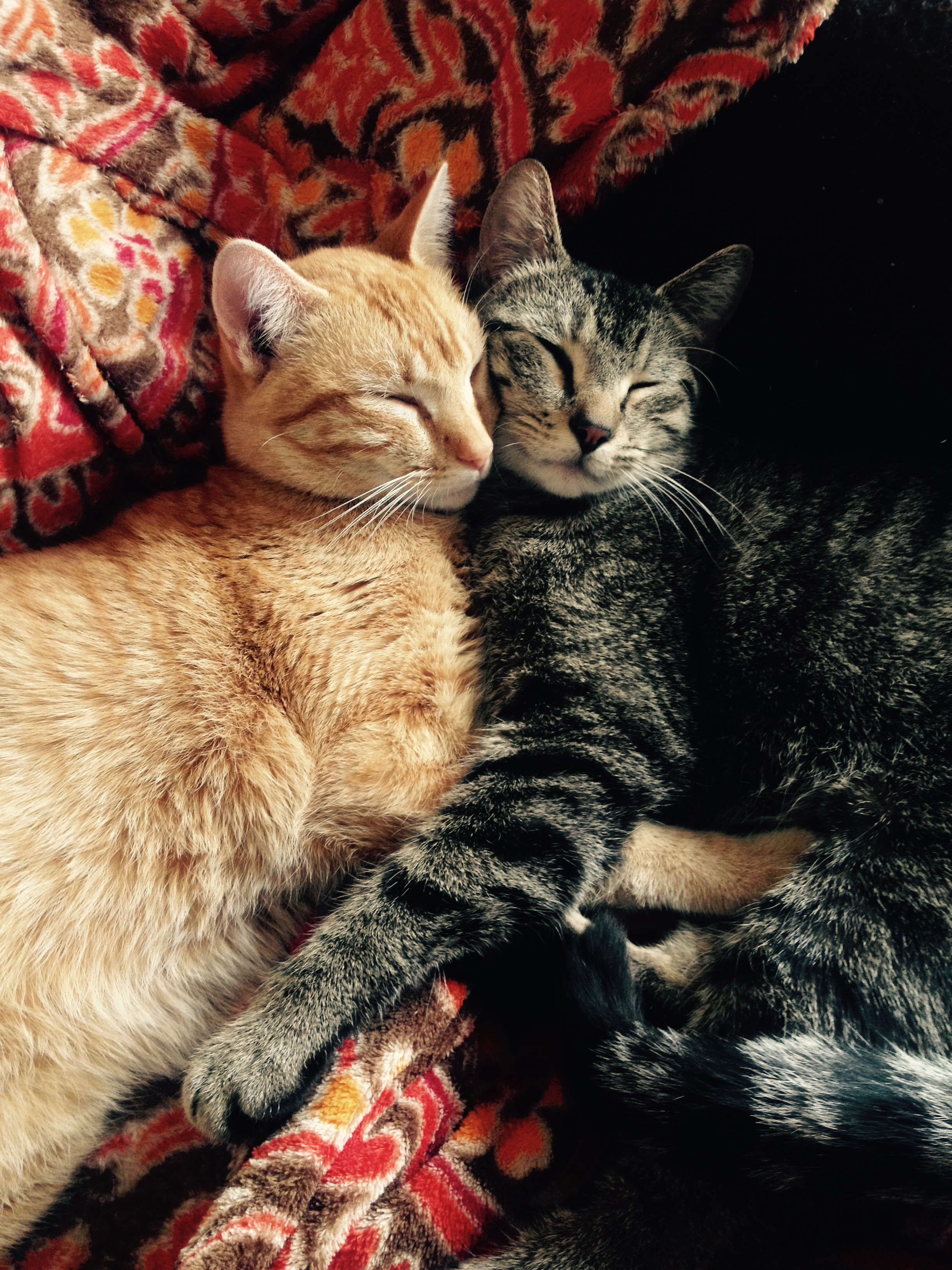 The 10 Cutest Types Of Cat Hugs Happy Hug Your Cat Day