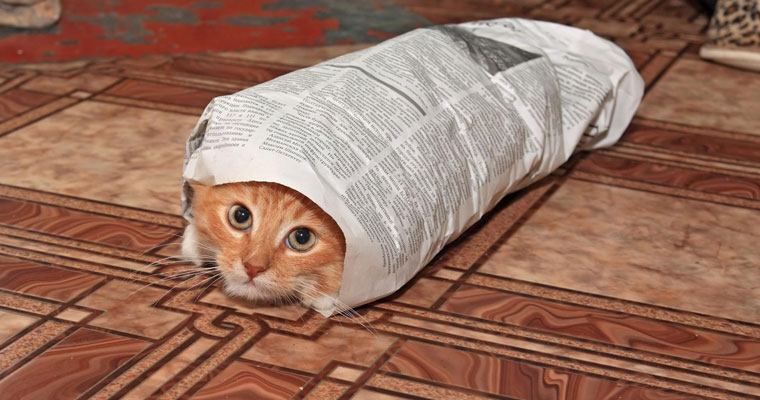 A image of a cat wrapped in newspaper